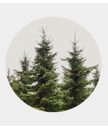 pino nordico della Svezia e Finlandia